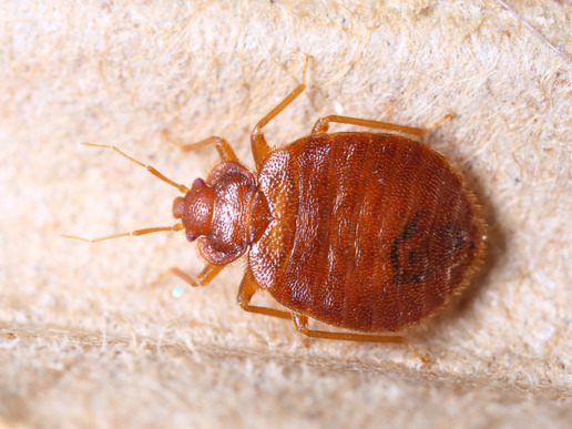 bed bug treatments los angeles