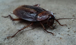 cockroach control of losangeles